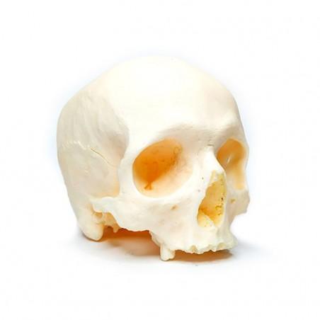 Skull - Replica 1 -